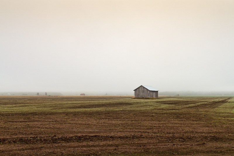 Mist Over The Empty Fields