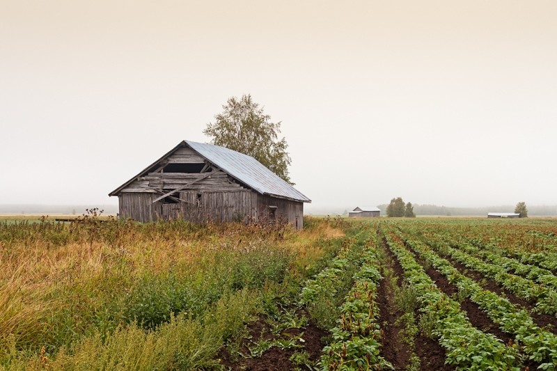 Old Barn Houses On A Misty Morning