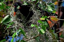 Weaver Nesting