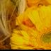 Sunny - ID: 15741343 © Rita Jane Smith
