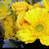 Blooms - ID: 15741551 © Rita Jane Smith
