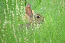In The Grassy Hideout