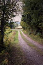Gravel Road By The Trees