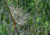 Greenbelt Web