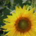 © Theresa Marie Jones PhotoID # 15744009: Sunny