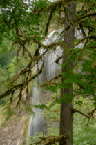 Cascading in the Trees