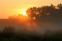 Morning Light In The Greenbelt