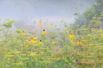 Fog In The Greenbelt