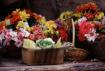 Baskets of Flower...