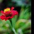 Bunch Park Flower - ID: 15746503 © Rita Jane Smith