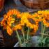 © Peter A. Reyer PhotoID# 15746685: Sun Flowers