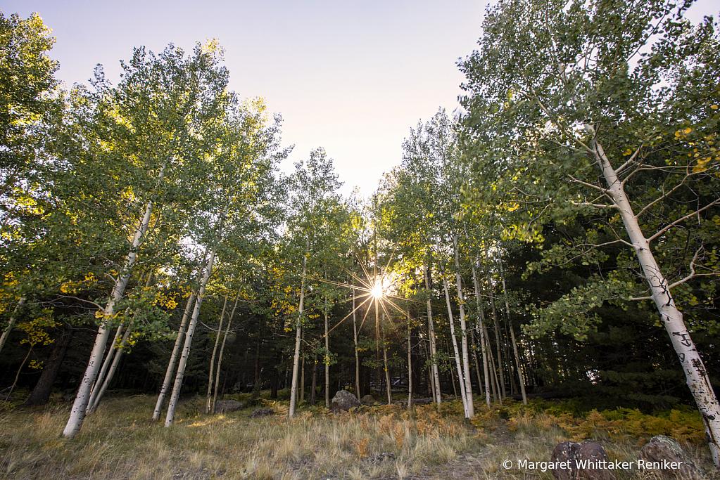Aspen Corner Sun Star - ID: 15748740 © Margaret Whittaker Reniker