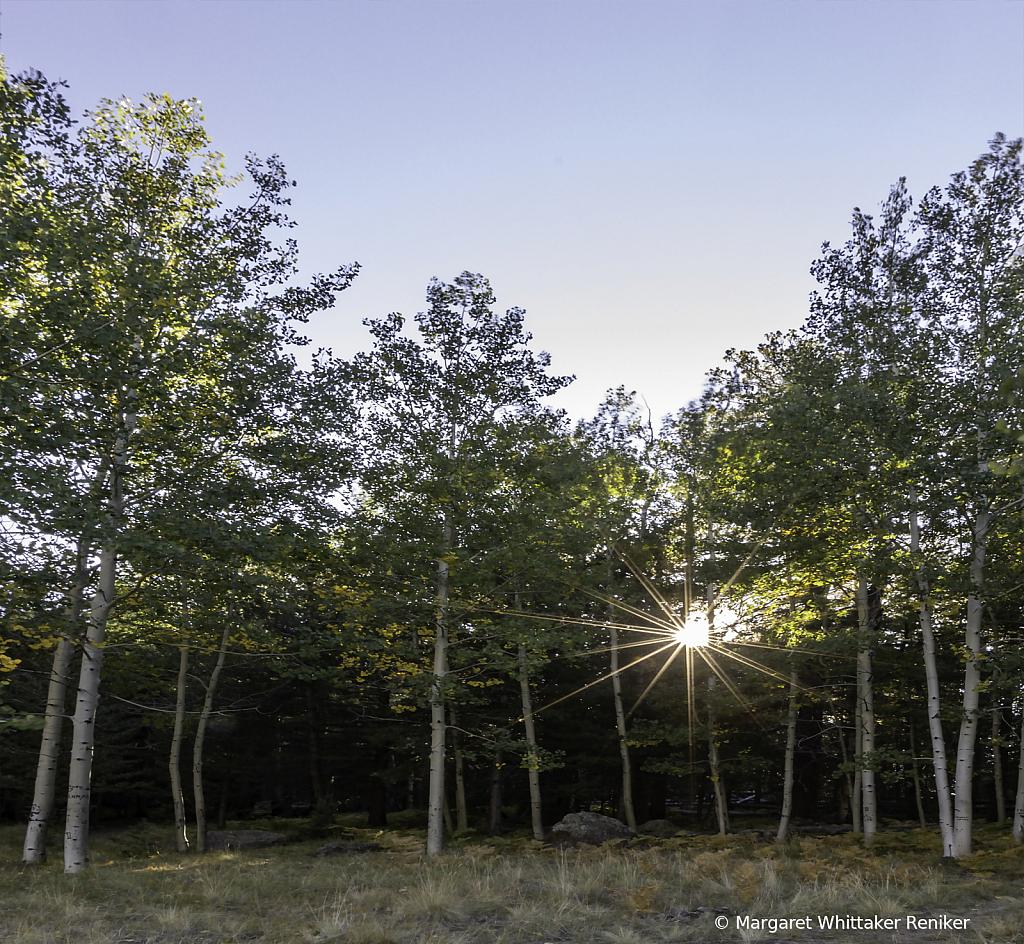Aspen Corner Lower Sun Star - ID: 15748741 © Margaret Whittaker Reniker