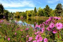 Blushing Pink Blossoms