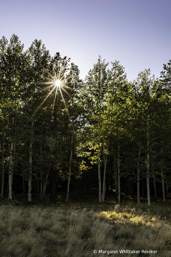 Aspen Corner Portrait Sun Star - ID: 15748929 © Margaret Whittaker Reniker