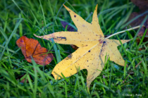 Fall Color, Southern Style