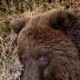 © James W. Betts PhotoID # 15753300: Brown Bear Alaska