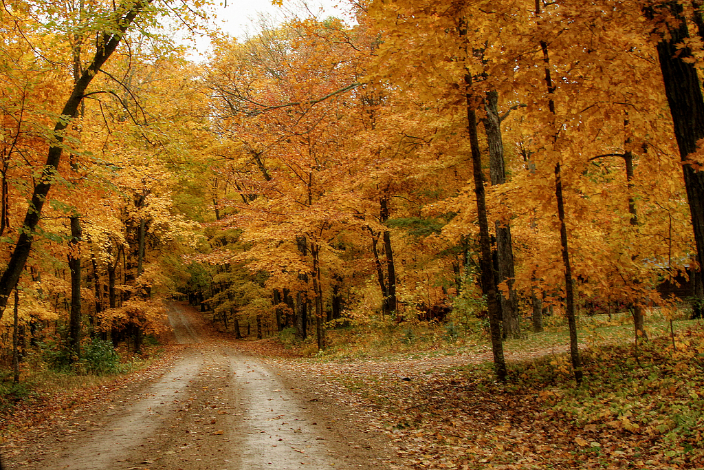 Country Driveway