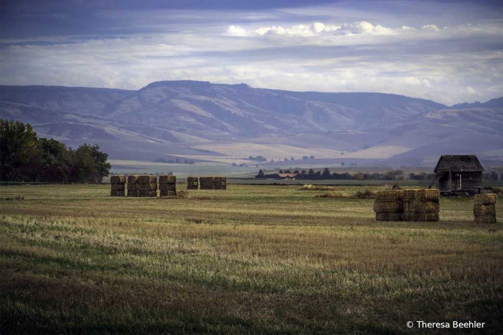 Landscape - Walla Walla Blue Mountains - ID: 15756899 © Theresa Beehler