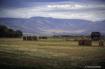 Landscape - Walla...