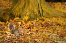 Squirrel at Fall
