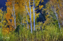 October Aspen