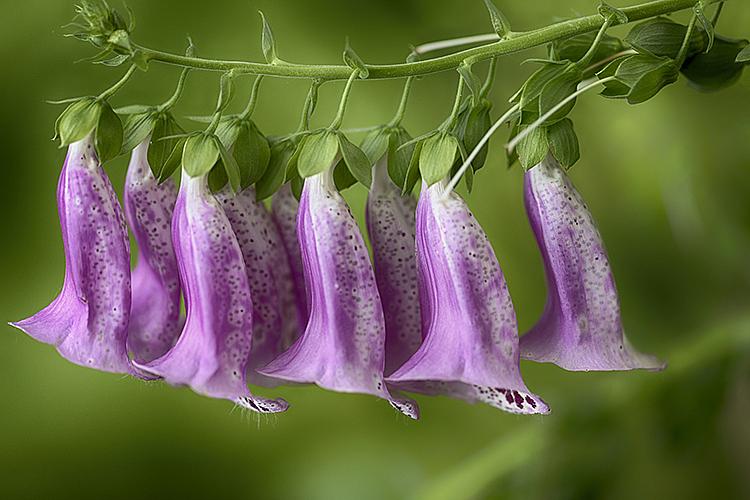 Flower 19-6879 - ID: 15758292 © Raymond E. Reiffenberger