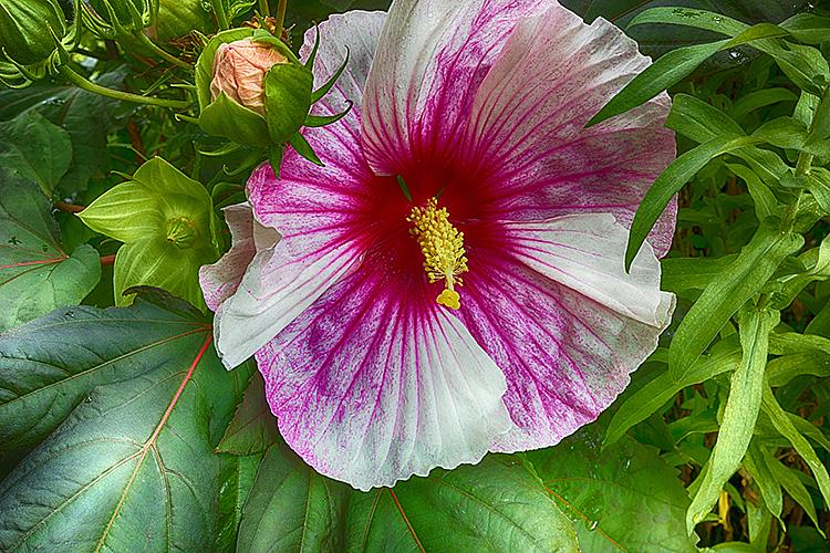 Flower 19-8544 - ID: 15758295 © Raymond E. Reiffenberger