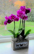 Orchids in Fall