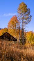 Autumn in the fresh mountain air