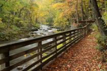 Leaf Covered Walkway