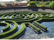 Circles of foliage