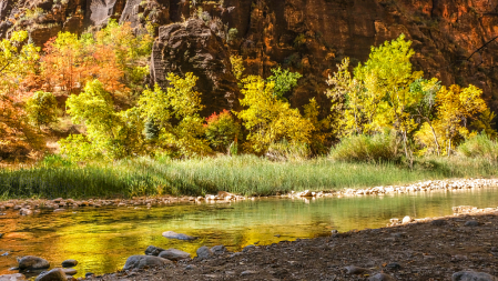 fall colors against red canyon walls