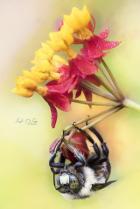 Bee Happiness