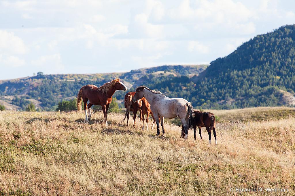 Wild Horses 8 2019 - ID: 15764492 © Roxanne M. Westman