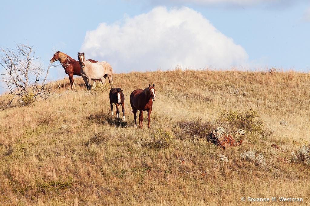 Wild Horses 11 2019 - ID: 15764495 © Roxanne M. Westman