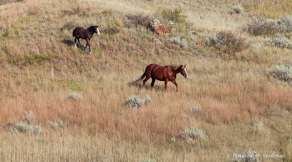 Wild horses 14 2019 - ID: 15764497 © Roxanne M. Westman