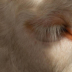 © Melvin Ness PhotoID# 15764376: Eye of the ?