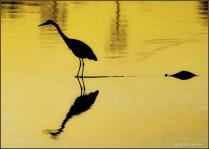 On LSU Golden Lake