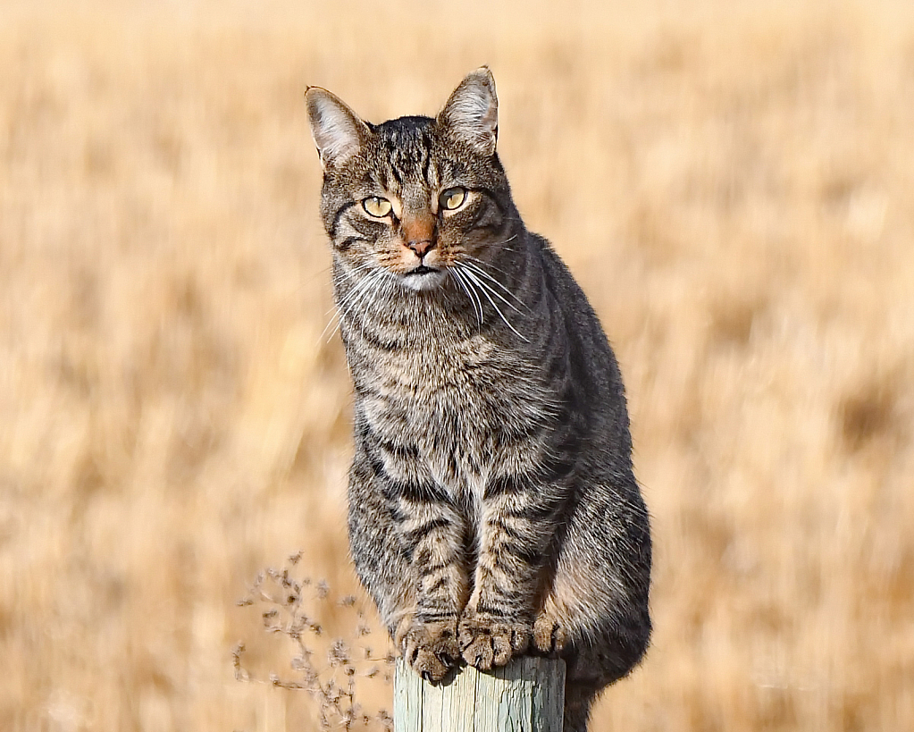The Cat On A Post