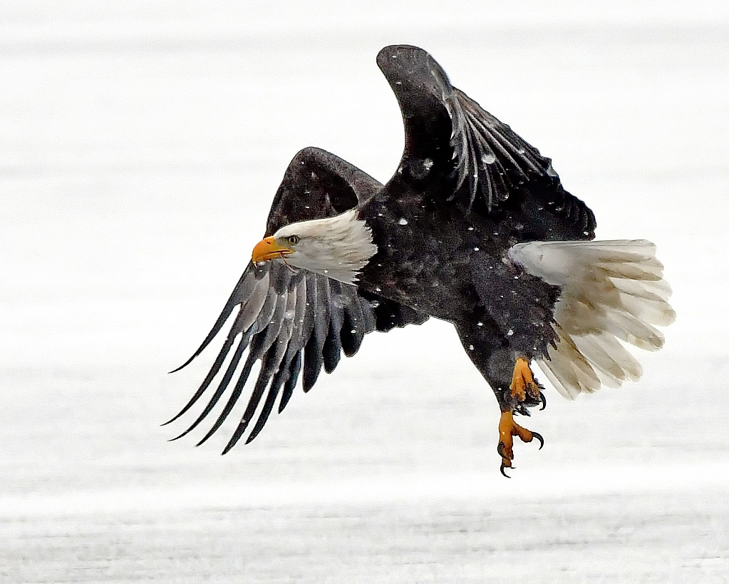 The Snow and the Eagle