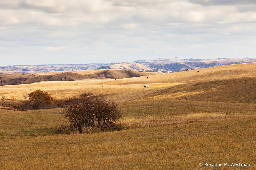 Contrast in landscape - ID: 15765541 © Roxanne M. Westman
