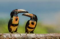 Beak to Beak