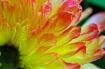 Colors in Gandama...