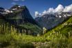 Glacier Beargrass
