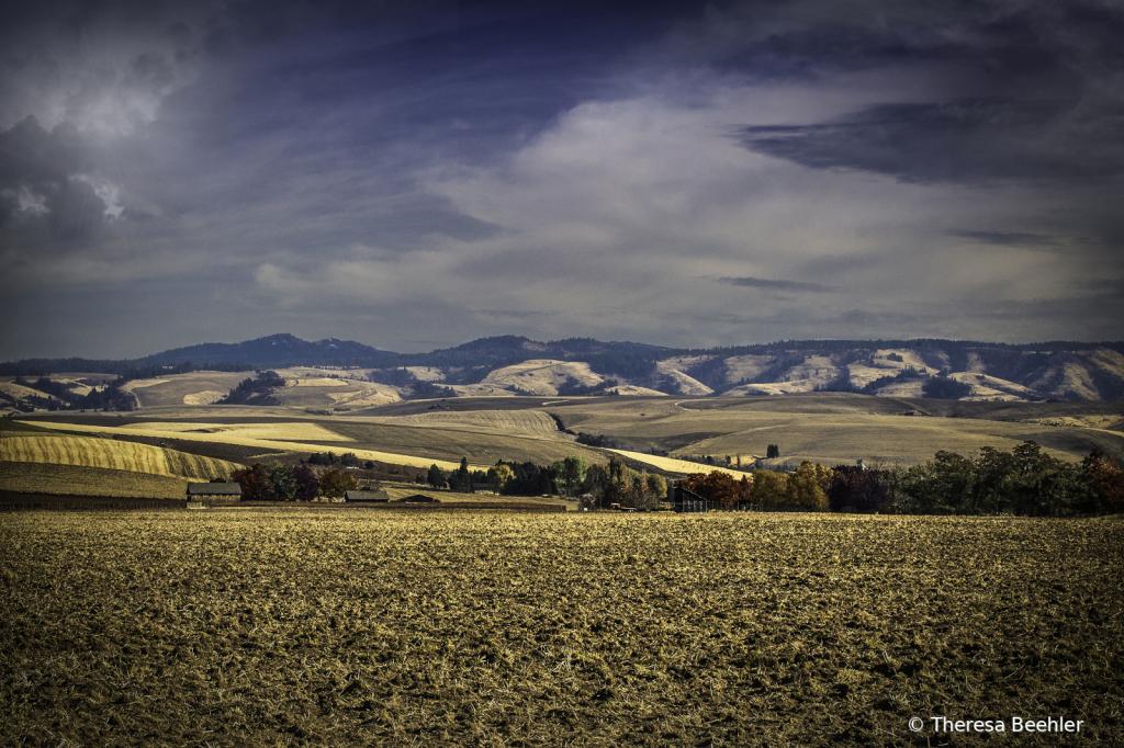Landscape - Walla Walla Blue Mtn Foothills - ID: 15766437 © Theresa Beehler