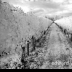© Edward v. Skinner PhotoID# 15767656: Vineyard in Infra red