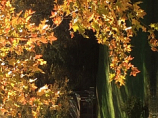 Framed by Fall