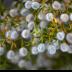 2Creosote - ID: 15769187 © Robert R. Goodman