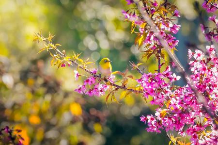 Bird and Cheery
